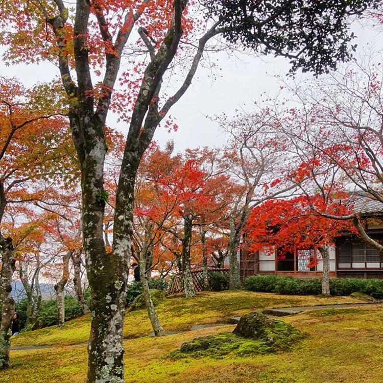 7. ดื่มด่ำกับบรรยากาศสวนญี่ปุ่นที่พิพิทธภัณฑ์ศิลปะฮาโกเนะ (Hakone Museum of Art -箱根美術館)