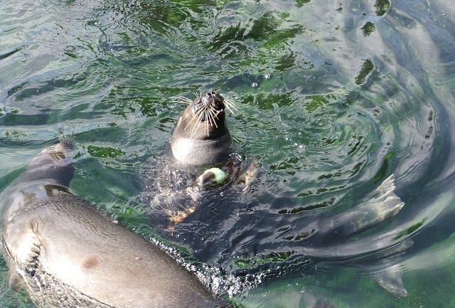10. เพลิดเพลินกับบรรดาสัตว์ที่สวนฮาโกเนะ (Hakone-en Garden -箱根園)