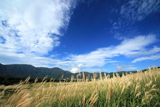 9. ถ่ายภาพที่ทุ่งหญ้าเซ็นโกคุฮาระ (Sengokuhara Susuki prairie -仙石原ススキ草原)
