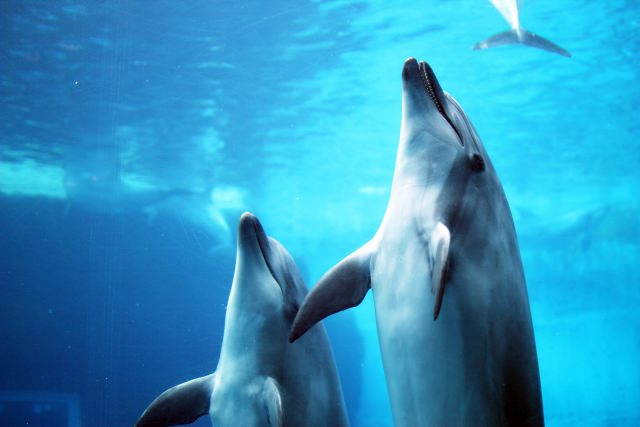 9. สวนสัตว์น้ำท่าเรือนาโกย่า