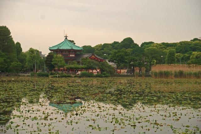 """5. ทะเลสาบ""""ซิโนะบะซึโนะอิเกะ"""""""