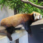 มูลค่าการมองเห็น! 5 อันดับสวนสัตว์ยอดนิยมที่แนะนำให้ไปเยือนเมื่อมาถึงโอกินาว่าของญี่ปุ่น!