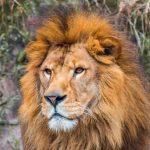 【ห้ามพลาด】5 สุดยอดสวนสัตว์ในญี่ปุ่นฟุกุโอกะ แนะนำจุดทัวร์โดยชาวญี่ปุ่น!!