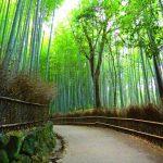 【ห้ามพลาด】10 สุดยอดสถานที่ท่องเที่ยวในเกียวโตอาราชิยามา แนะนำจุดทัวร์โดยชาวญี่ปุ่น!!