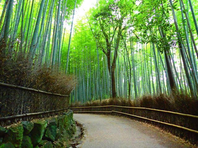 1. สูดอากาศบริสุทธิ์ และวิวสุดวิเศษ ทำให้อยากถ่ายรูปเก๋ๆลง SNS ที่ป่าไผ่「竹林」